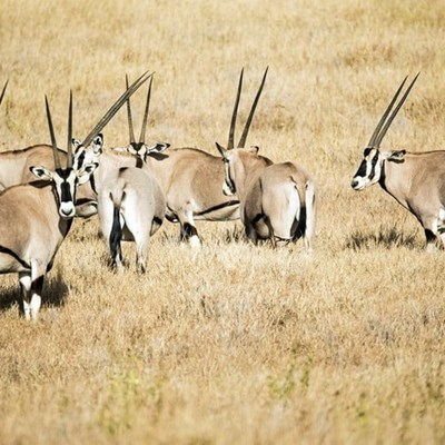 Why is SANParks planning to kill thousands of animals in their parks?