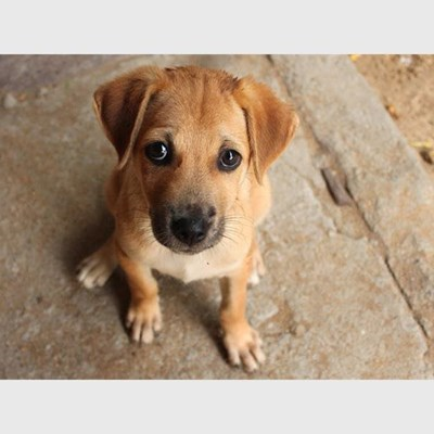 Huge spike in online fraud as dogs and puppies are used as bait