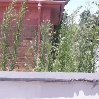 Onkruid groei welig by Heatherpark-substasie
