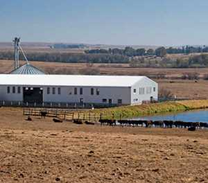 Mixed farming: Key to livestock success for Free State farmer