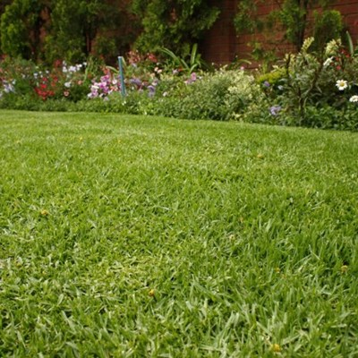 Water-wise lawns: Lawn of the future