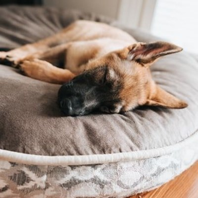 First-aid kit checklist for pets