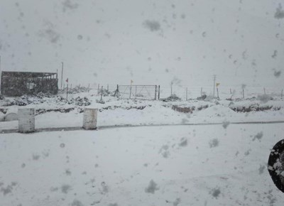 Kouefront bring sneeu