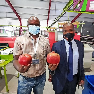 GRDM assists expansion of local pomegranate industry