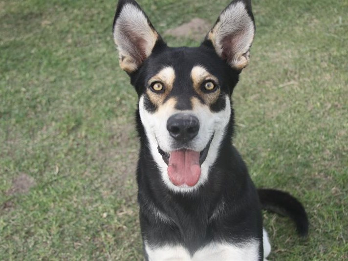 Pets for adoption at SPCA