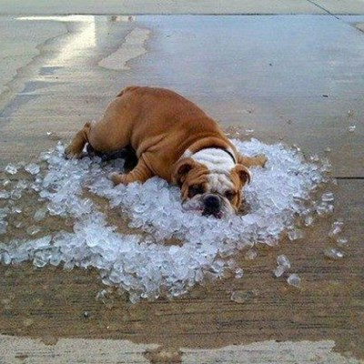 Heatwave grips Western Cape