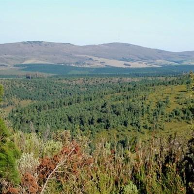 Alien invasive pines fuelled Knysna fires
