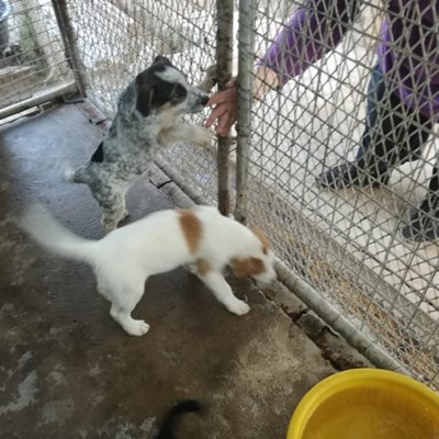 Honde- en katkos dringend benodig
