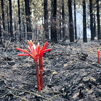 Garden Route fires: Latest update