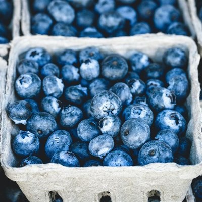 Demand for SA 'superfood' blueberries booming