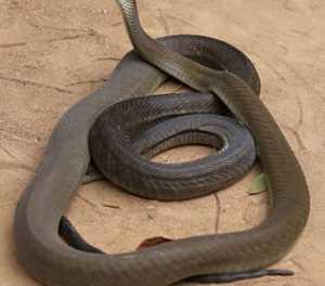 Ford highlights World Snake Day