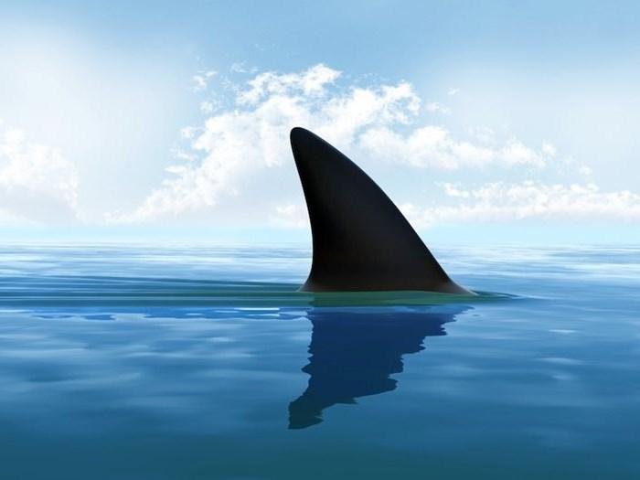 7 sharks spotted near Plett