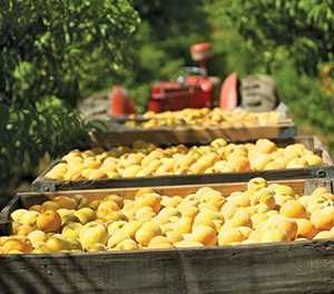Marginal uptick in SA's agribusiness confidence