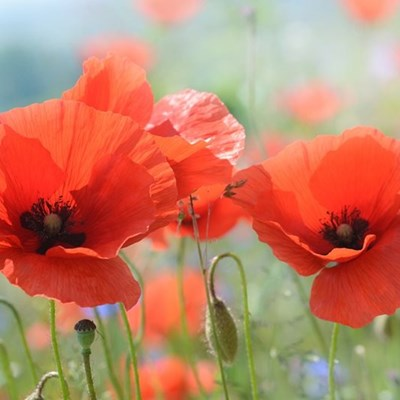Remembrance Day parade this Sunday