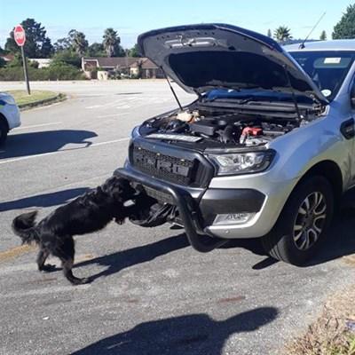 Hond snuffel R5 miljoen se tik uit bakkie