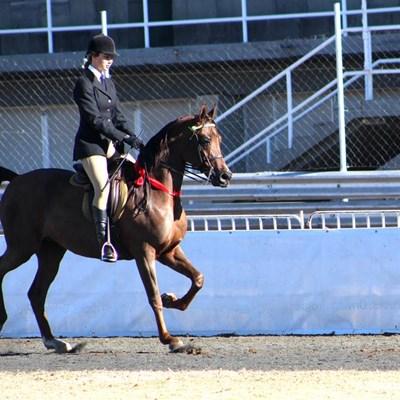 Kendall not horsing around