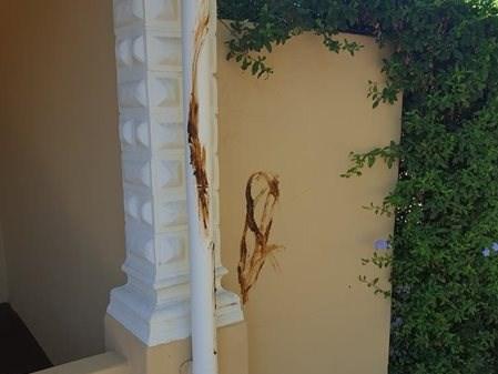Cradock Street houses vandalised