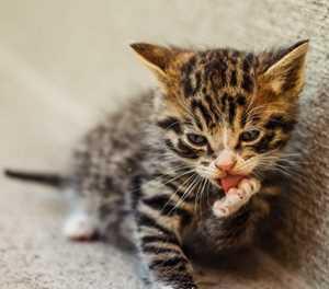 Sterilise your cats, kitten season is here