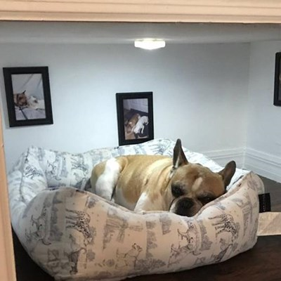 Renovations to keep your pets warm this winter