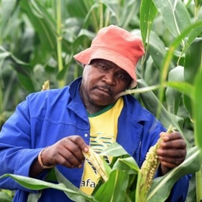 Why land reform fails – but not in the WC