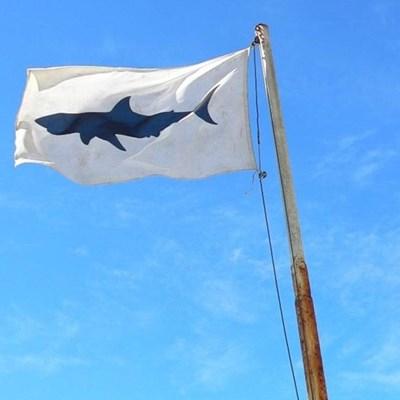 Warning: Shark activity in Plett