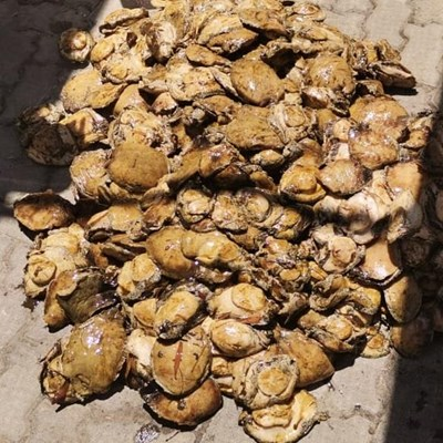 Police hailed for abalone bust