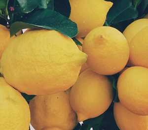 From fruit hawker to successful lemon exporter