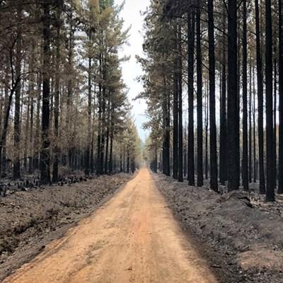 Latest Garden Route fire update