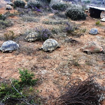 Rescued tortoises find a home