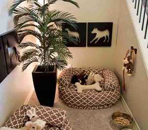 Tips for keeping pets in smaller homes
