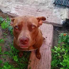 News - dog fights | George Herald