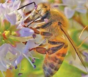 Theft of beehives spikes as demand for pollinators increases