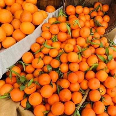Load-shedding burdens SA's fruit industry
