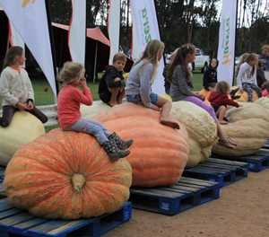 Giant Pumpkin time in Heidelberg