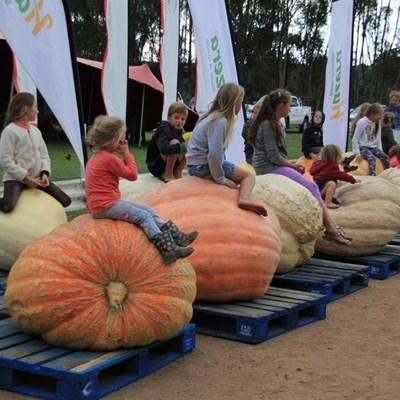 Giant Pumpkin time in Heidelberg