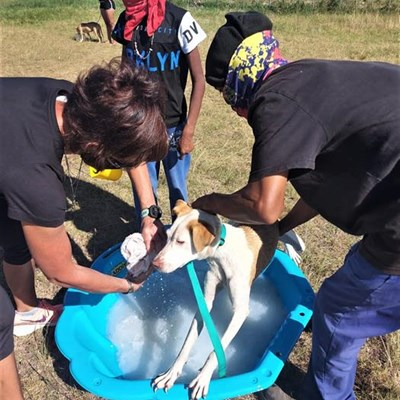 CAWS 4 PAWS coping with Covid-19