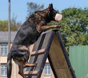 New dog club hosts first Kusa trial
