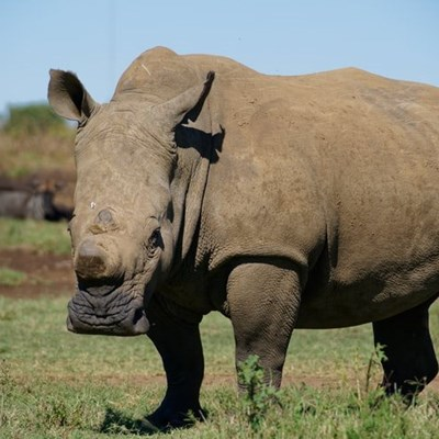 Poverty the main driver behind poaching in SA, study finds
