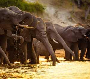 Best spots in Botswana for a safari