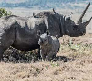 World Rhino Day: 5 facts about South Africa's rhino species