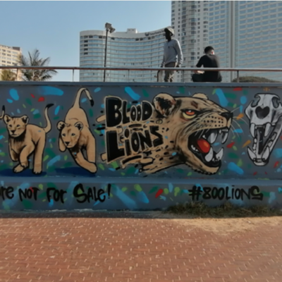 Blood Lions launches global awareness campaign on World Lion Day