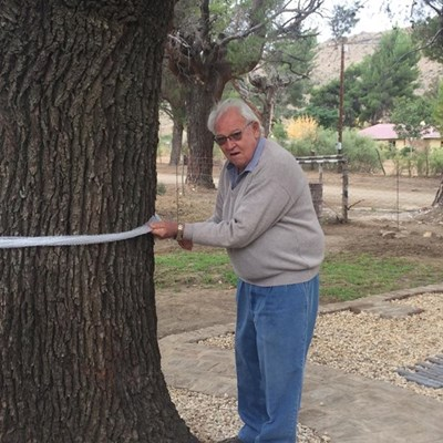 Historic tree commemorated