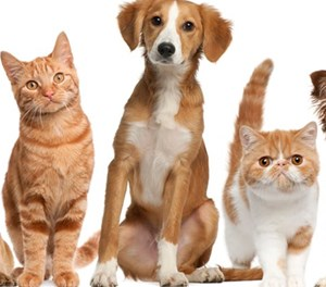 Pets need extra care