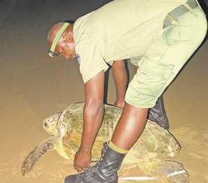 Community's dedication helps turtles thrive