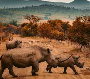 Wildlife Zones introduced to protect rhino