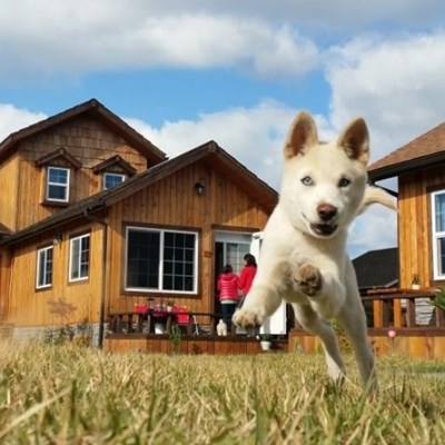 Five ways to make moving easier for your pets