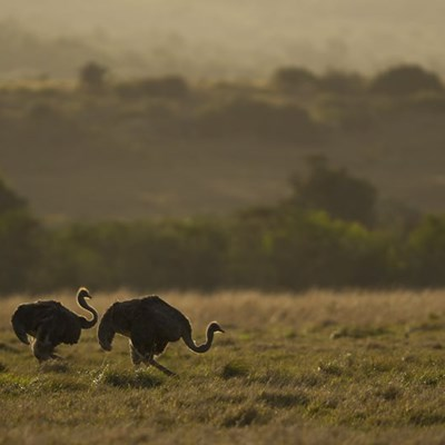 What to Expect from a Safari at Kariega Game Reserve