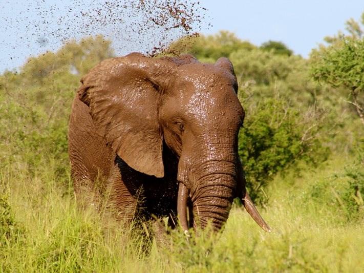 Celebrate World Elephant Day