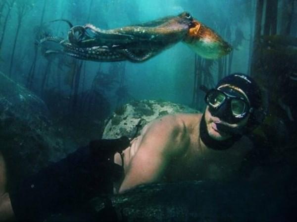 SA's 'My Octopus Teacher' bags Bafta