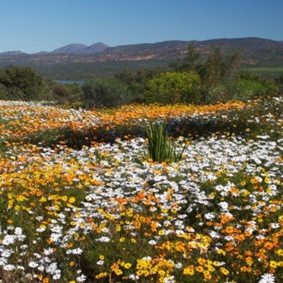 Cape Town: Most biologically diverse city